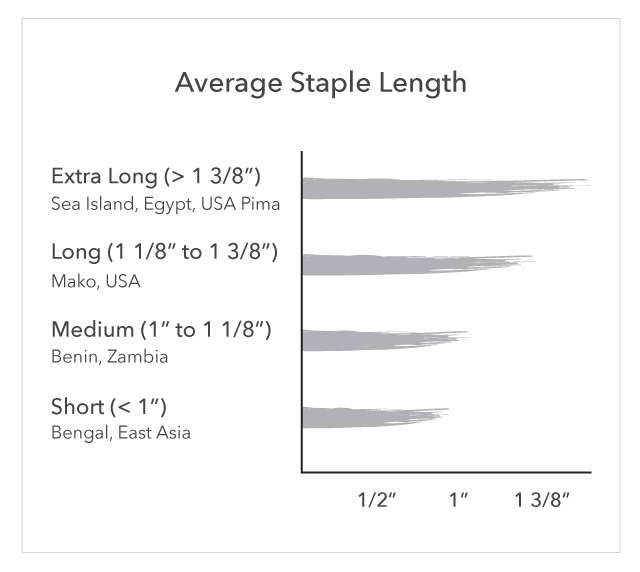 Chart comparing staple length of Sea Island Cotton to other types